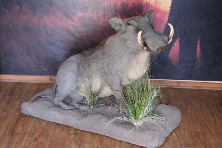 Full Mount Warthog Sitting