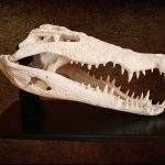 Crocodile Skull Pedestal