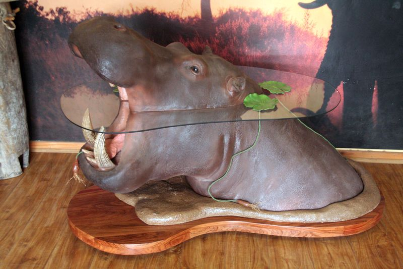 Hippo Out Of Water Coffee Table Colletts Wildlife Artistry - Hippo coffee table