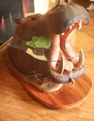 Hippo Coffee Table