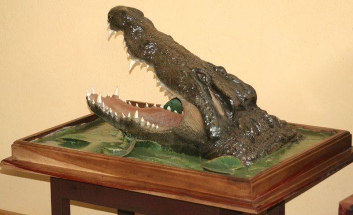 Crocodile Head Pedestal