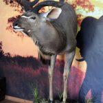 Kudu Half Body Pedestal