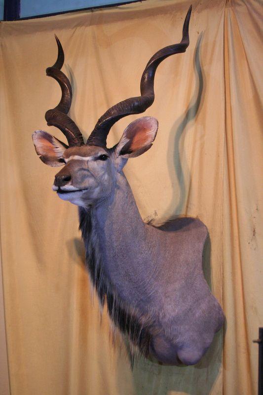 Kudu Off Set Shoulder Mount