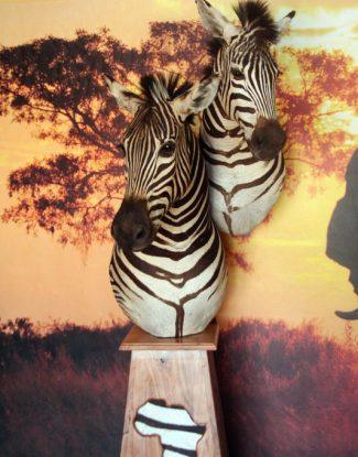 Zebra Duo Pedestal