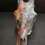 Wild and Native Africa on Giraffe Skull