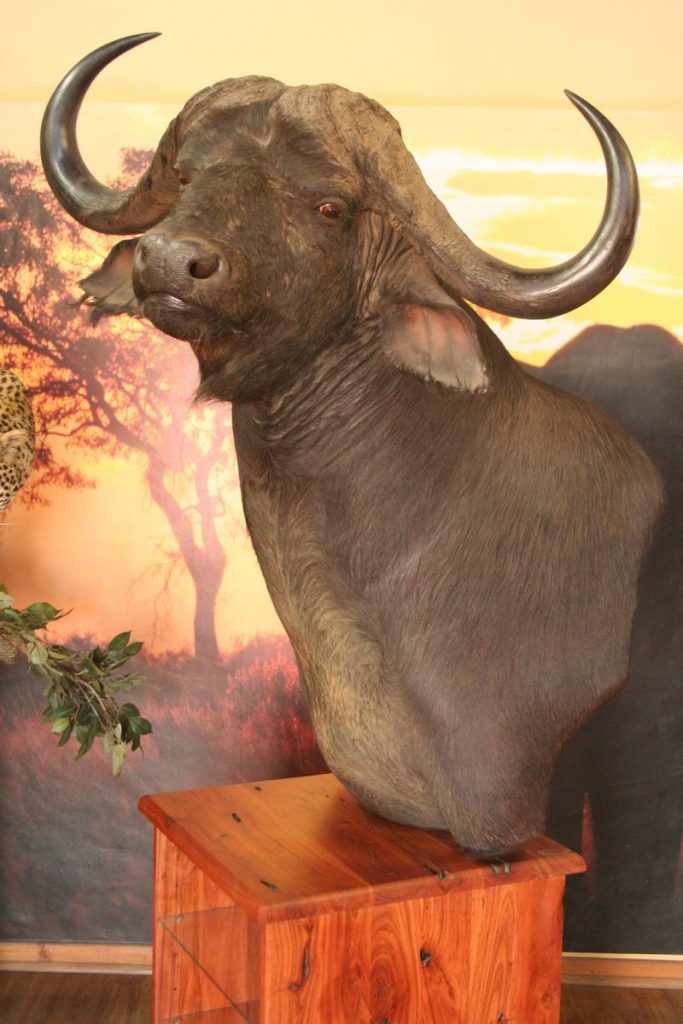 Custom Buffalo Pedestal