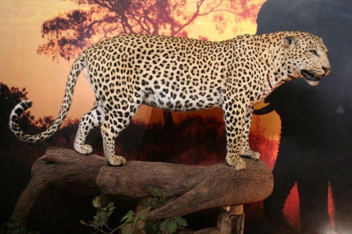 Leopard Tree Mount